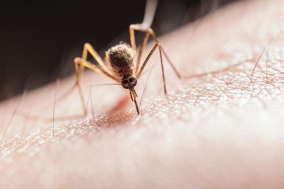 Το καλοκαίρι τα τσιμπήματα από κουνούπια και άλλα έντομα είναι συχνά.
