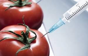 Γενετικά Τροποποιημένα Τρόφιμα Μύθοι και Αλήθειες