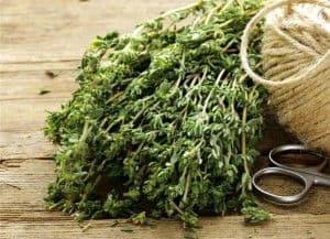 Τα φαρμακευτικά φυτά, χρησιμοποιούνται στην ιατρική για περισσότερα από 4000 χρόνια