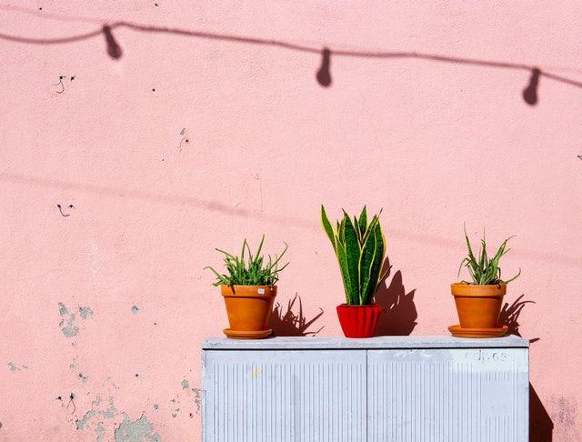 Η Aloe Vera δίνει λύση με τον πλέον φυσικό τρόπο.