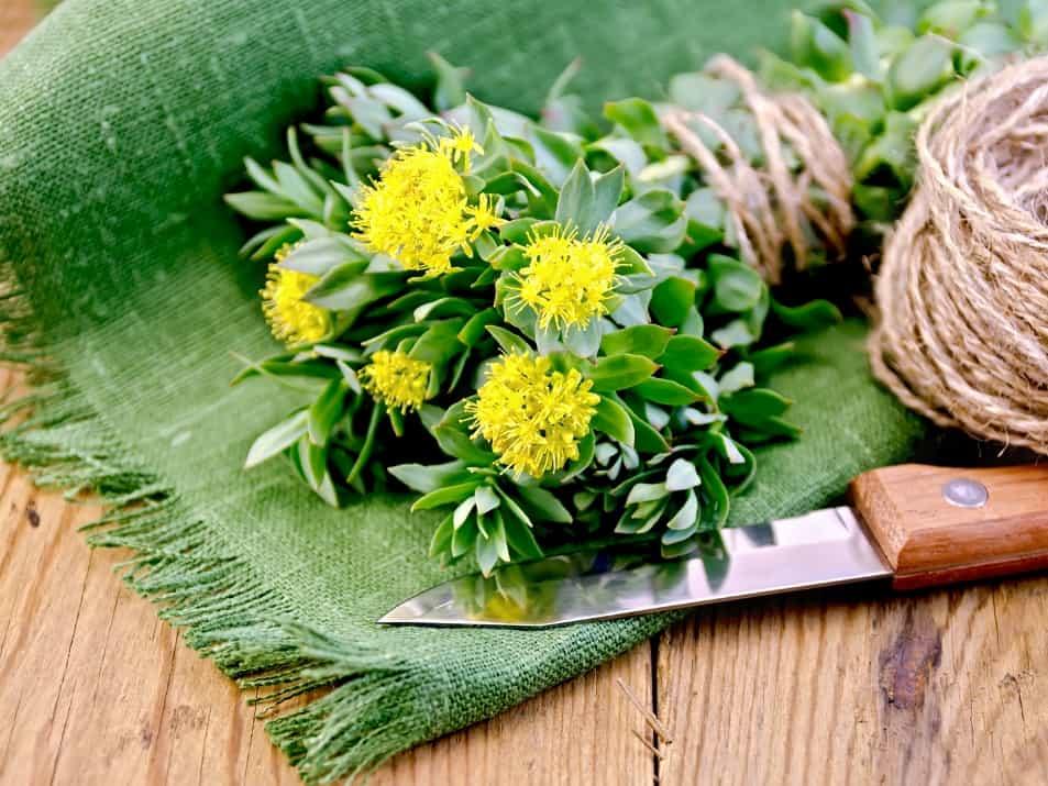 Αγχολυτικά Φυτά