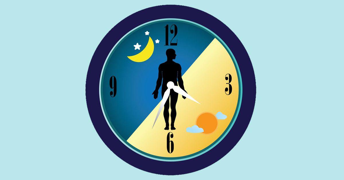 Οι αποδοτικότερες ώρες σύμφωνα με τους βιορυθμούς μας είναι το πρωί πριν το πρωινό, το μεσημέρι πριν το μεσημεριανό, το απόγευμα πριν από ένα ελαφρύ βραδινό.