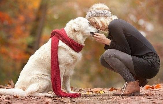 Μελέτες έχουν δείξει πώς τα σκυλιά μειώνουν τα επίπεδα του άγχους.