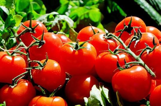 Ωστόσο, με περίπου 95% περιεκτικότητα σε νερό, οι ντομάτες, όχι μόνο δεν παχαίνουν, αλλά αντιθέτως ενυδατώνουν τον οργανισμό μας.