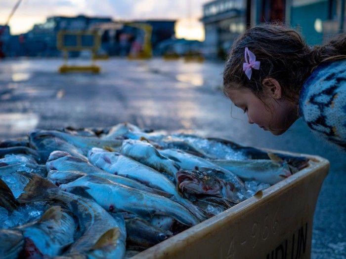 Σπάνια Γονιδιακή Μετάλλαξη Προκαλεί Ανοσμία στα Ψάρια.