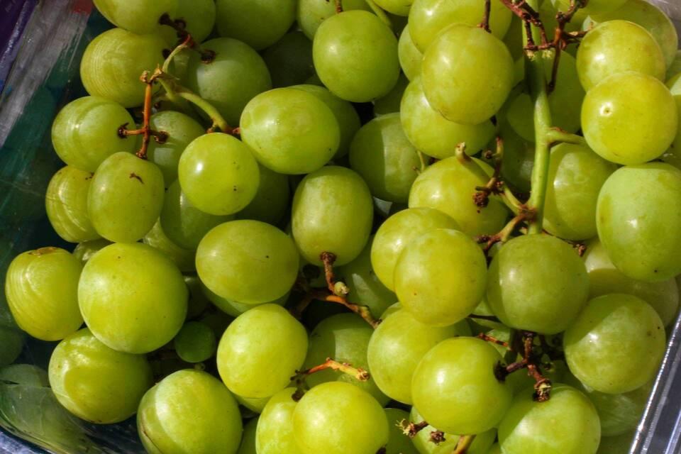 Η φλούδα των σταφυλιών είναι καλή πηγή φυτικών ινών, οι οποίες συμβάλλουν στην υγιή απώλεια βάρους.